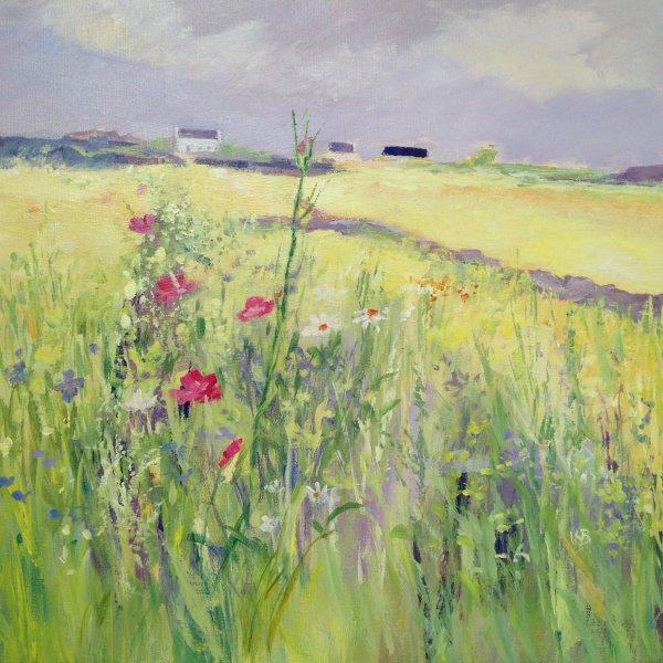 Hebridean Fields in June