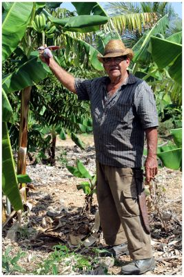 Farmer and Banana Tree