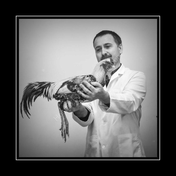 Mark Chivars - Poultry Judge examines a lovely bird