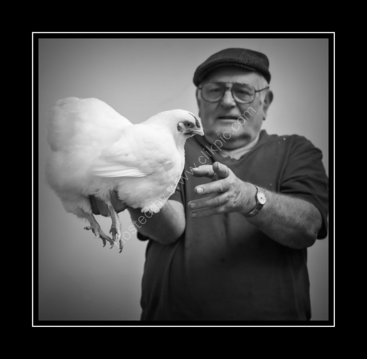 Alwyn Price - The show manager who has been a member of the club for around 25 years. At 78 years of age there's no slowing Alwyn down. In this image Alwyn proudly shows off his White Wyandotte.