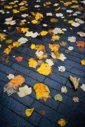 Leaves on pavement