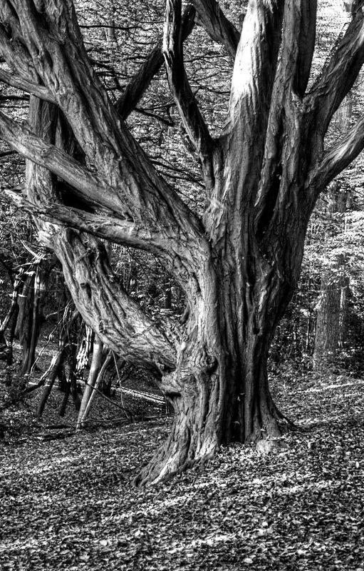 Thorndon Park Tree1