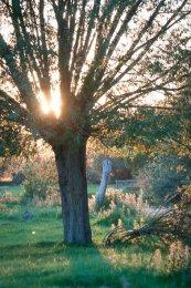 Stour Tree