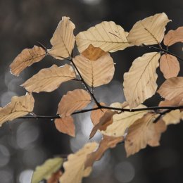 Autumnal Leaves 3