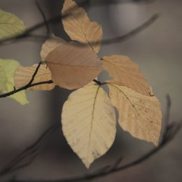 Autumnal Leaves 4