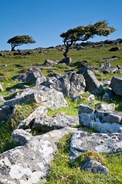 Granite and trees