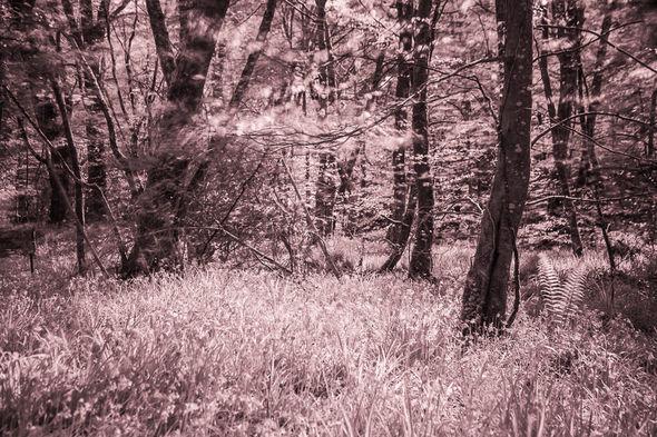Woodland near Respryn, Cornwall