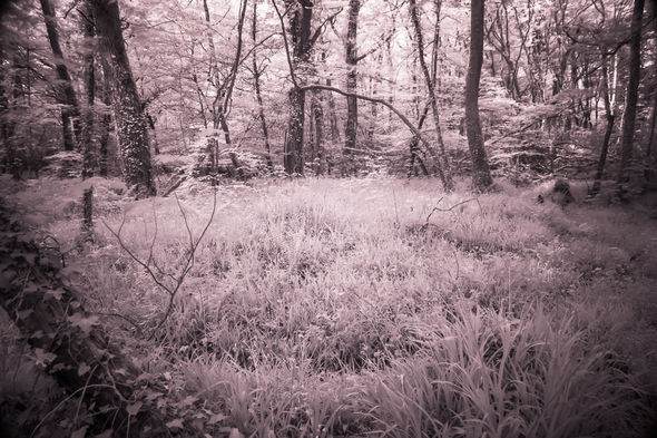 Woodland flowers, Respryn, Cornwall