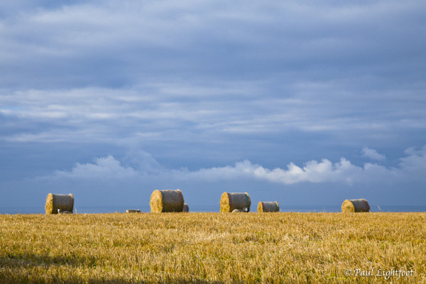 Bales, sheep and clouds
