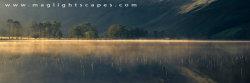 Buttermere reeds