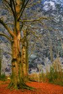 Eerie Treescape