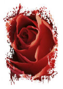 Abstract Red Rose