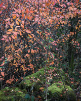 Autumn Leaves, Gait Barrows