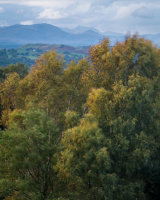 Autumn Trees, Lakeland Fells, Whitbarrow