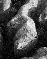 Limestone Detail, Malham 01