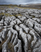 Limestone Pavement, Gordale