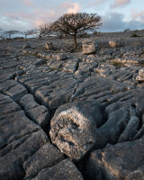 Limestone Pavement, Holme Park Fell