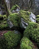 Mossy Boulders 01, Whitbarrow