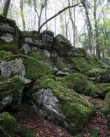 Mossy Crag, Hyning Scout Wood