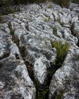 Pavement & Ferns, Hutton Roof