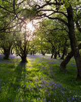 Spring, Wharfe Wood