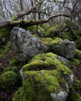 Woodland Boulders, Hutton Roof