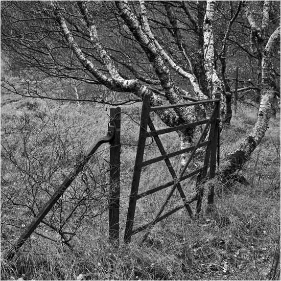 Forgotten gate (see video)