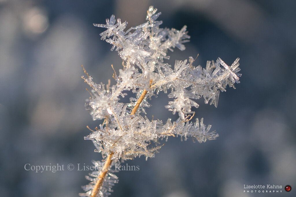 Spectacular rime crystals after a cold night during Christmas 2020