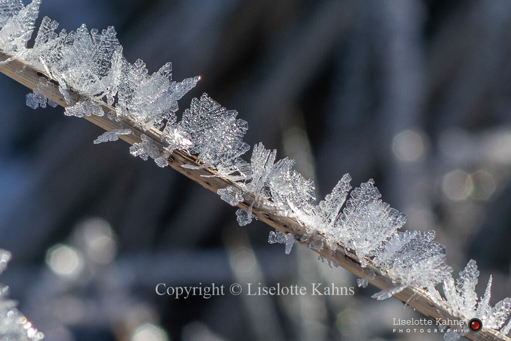 Spectacular rime crystals after a cold night in February 2021