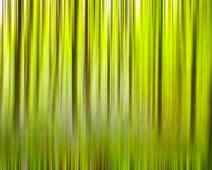 Trees, Abstract - 1583