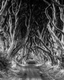 Dark Hedges - 7039