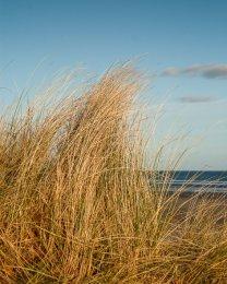 Murlough Beach - 0120