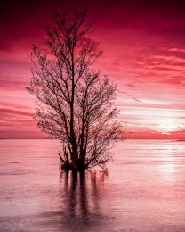 Flooded Tree, Lough Neagh - 2398