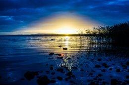 3 Swans, Lough Neagh - 3865