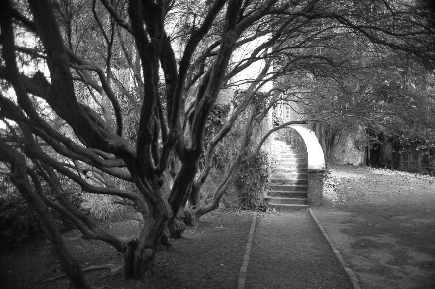 Malahide Castle Grounds - 1140