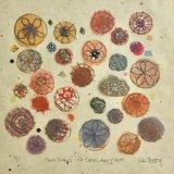 Seashells in Corel-violet