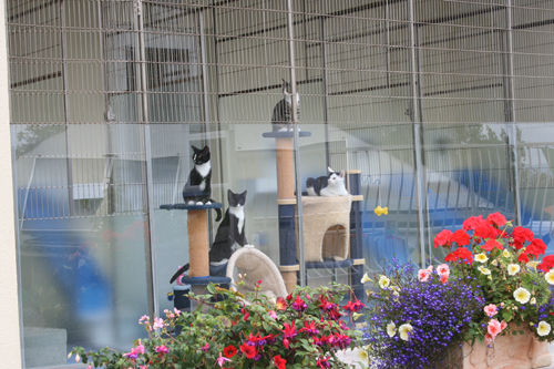 Cats in the cattery