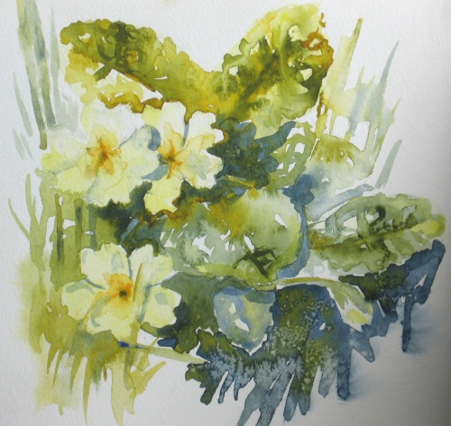 Devon primroses