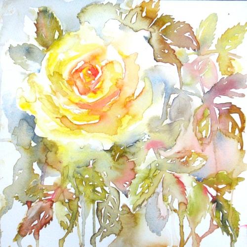 Yellow morning rose
