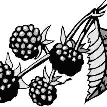Dalmatia blackberry spread
