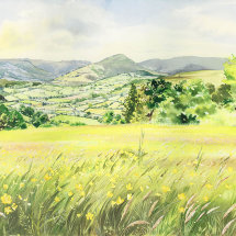 Sallys field