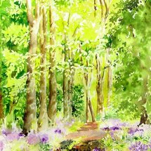 cuckoos and bluebells