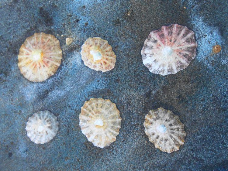 Beachcombing 2 (detail)