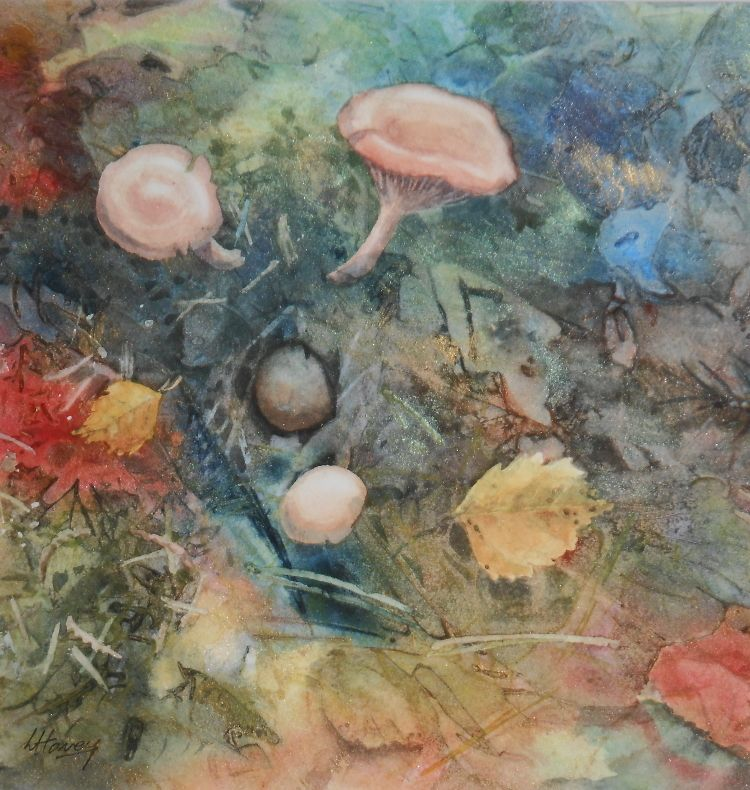 Forest Floor, Fungi