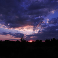 sunset at Wareham Forest