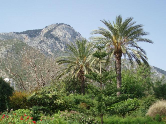 N Cyprus 357