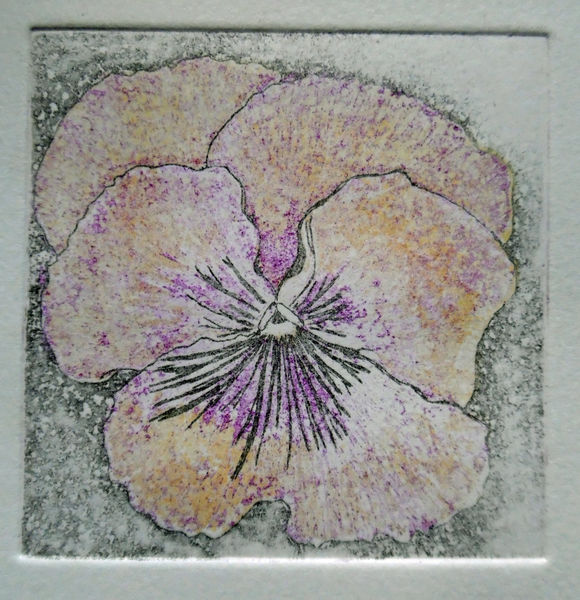 2 Pansy  £30