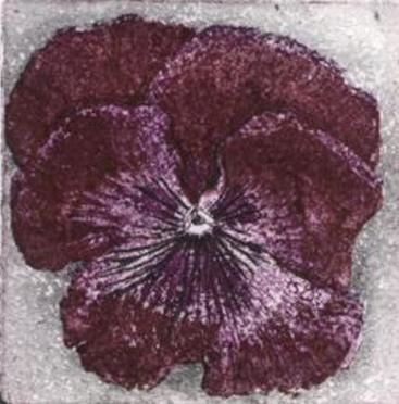 7 Pansy etching  £30