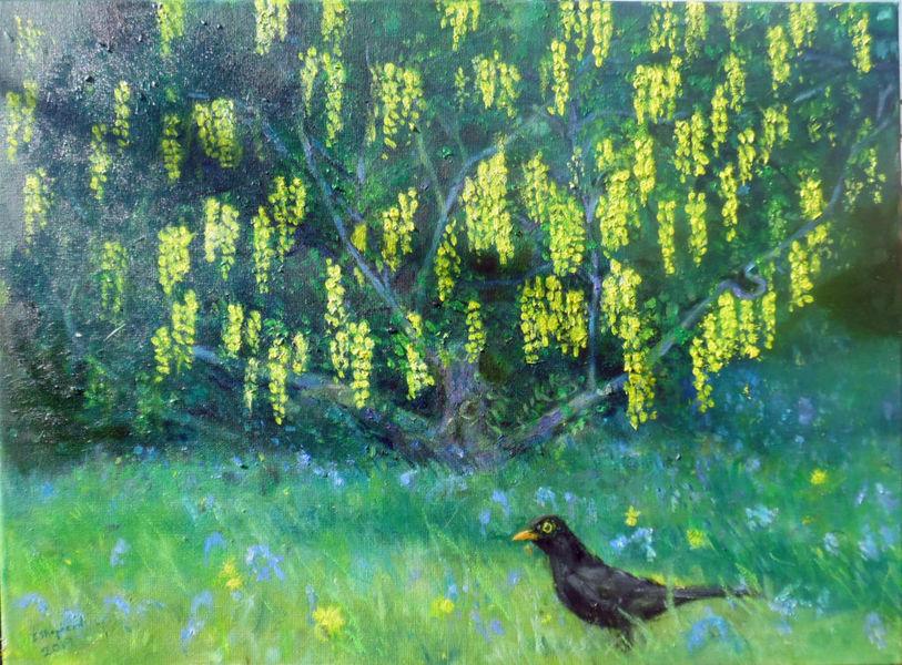Blackbird oil painting £600