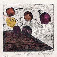 Crab Apples etching and water colour £50 10 x10 cms